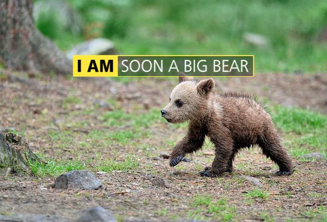 I AM Soon a big bear