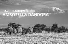 David Yarrow | Amboseli & Dandora