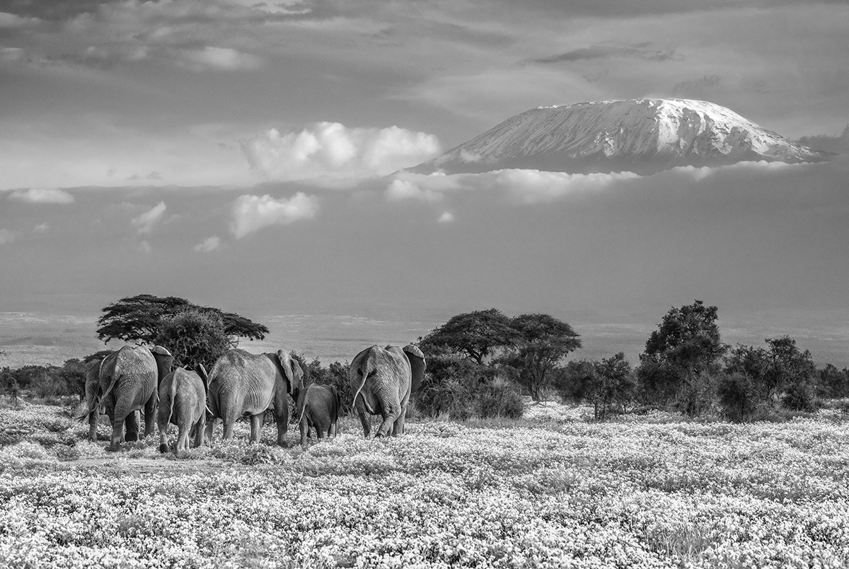Garden of Eden | Nikon D850 | 1/500 s | f/7.1 | 105 mm | ISO 250 | AF-S NIKKOR 105mm f/1.4E ED | ©David Yarrow