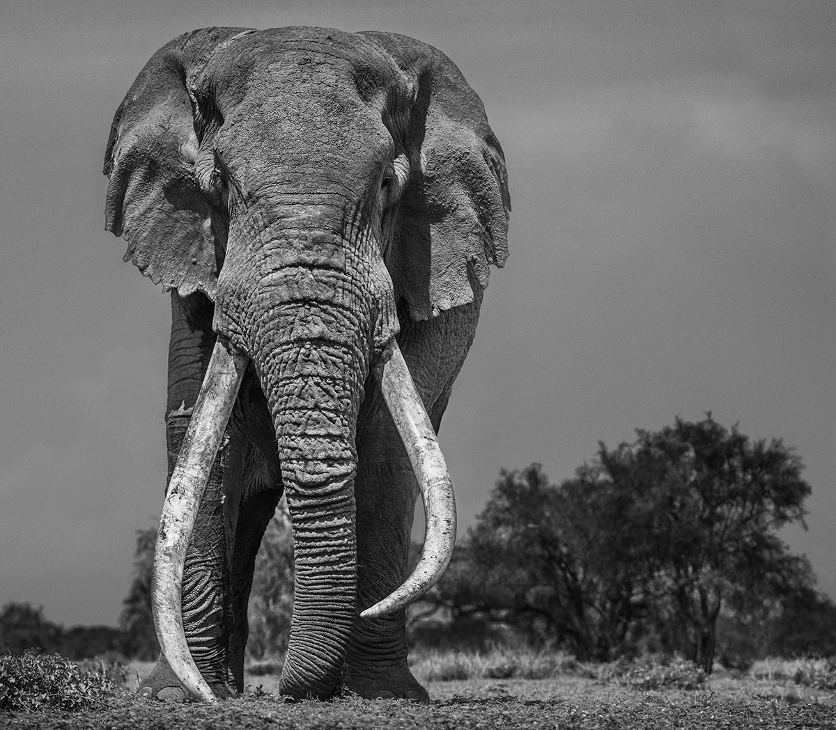 Coloso | Nikon D850 | 1/1250 s | f/8 | 200 mm | ISO 200 | AF-S NIKKOR 200mm f/2G ED VR II | ©David Yarrow