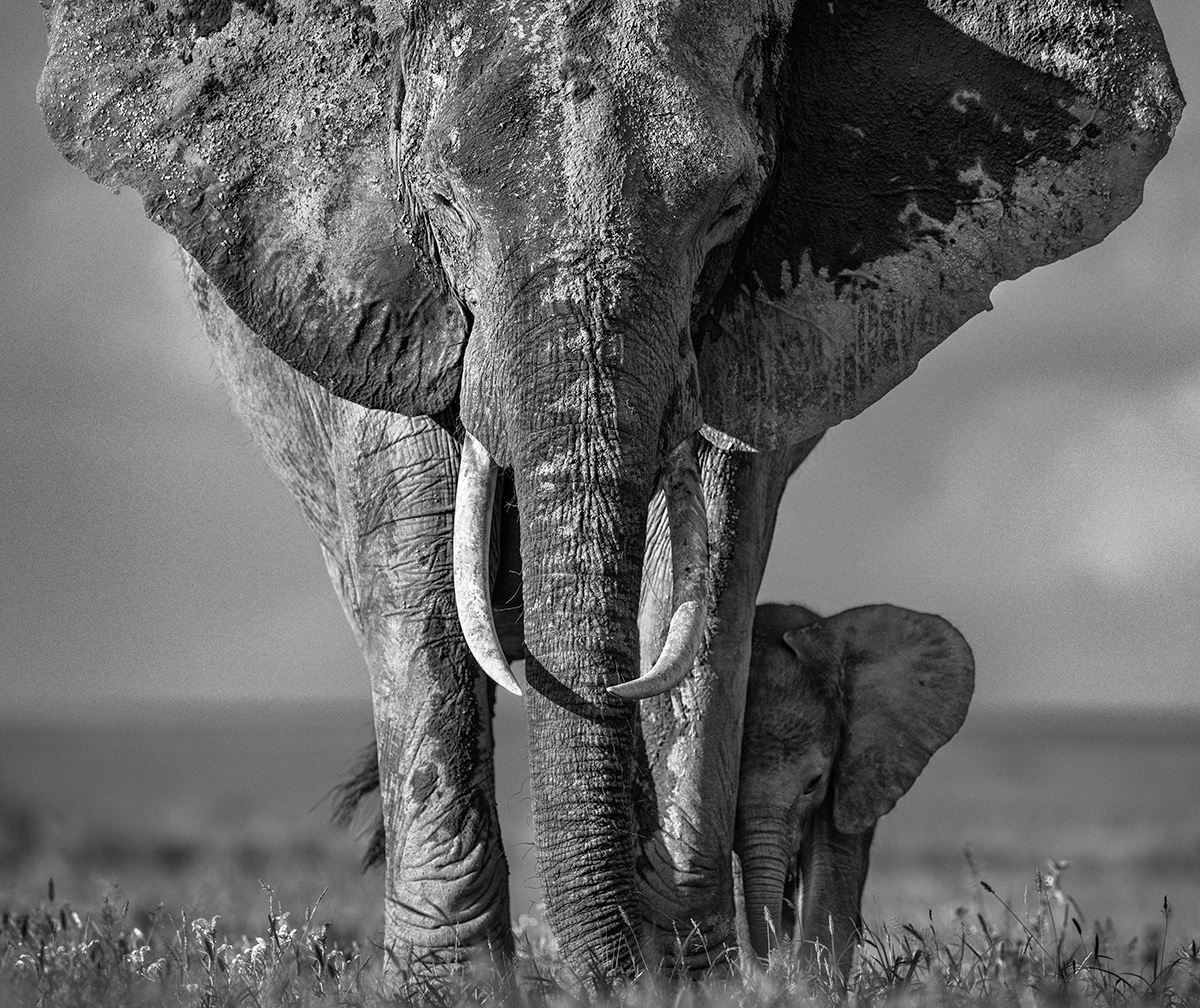 The Walk of Life | Nikon D850 | 1/1600 s | f/5 | 400 mm | ISO 160 | AF-S NIKKOR 400mm f/2.8G ED VRII | ©David Yarrow