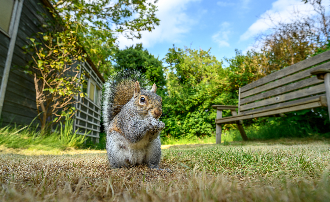uk_hero-shot-squirrel1_richardpeters_108