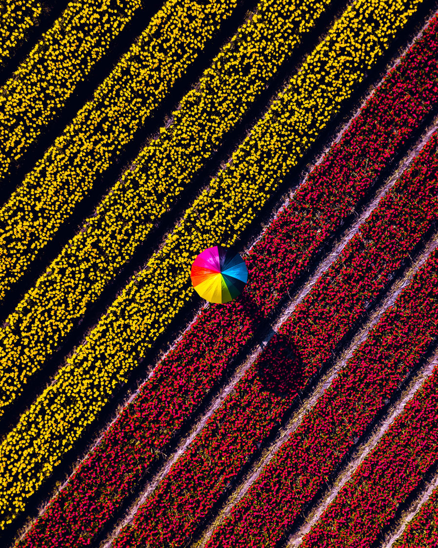 Red/Yellow Flower Army © Cuno de Bruin | Equipo Mavic Pro